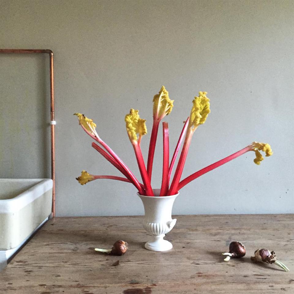 rhubarb by charlie